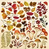 Fabrika Decoru - Set of images for cutting. Collection Botany Autumn
